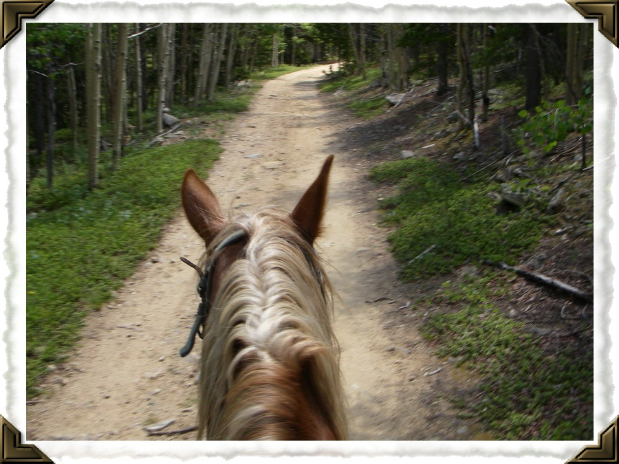 Horseback riding near Cottonwood RV in Colorado